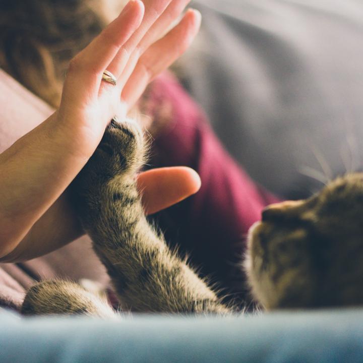 猫の手も借りたい介護業界